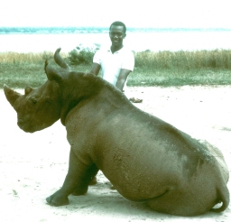 Ward with a rhinoceros during a 1964 Peace Corps visit to Uganda.