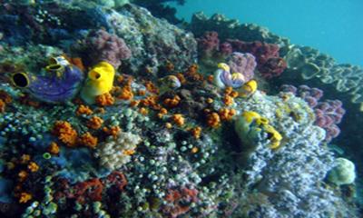 $5M grant will help conserve Coral Triangle
