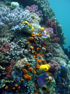 Research Center Will Be at Epicenter of Marine Biodiversity